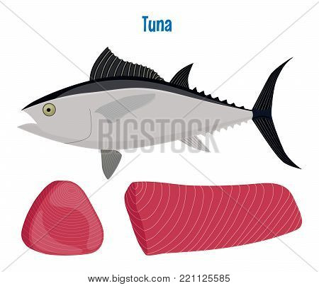 Vector illustration of tuna. Sea fish steak or fillet isolated on white