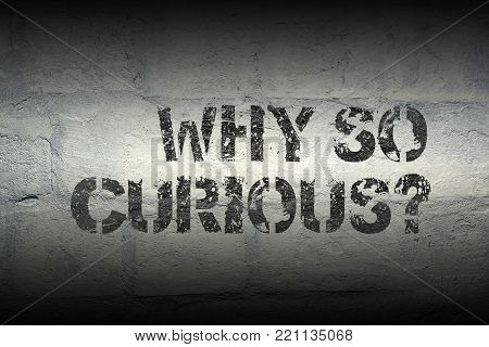 why so curious question stencil print on the grunge white brick wall