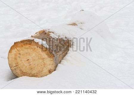 Log in the snow. Wood log on white background