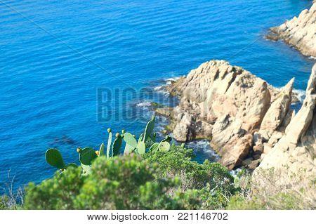 Landscape Costa Brava Tossa de Mar coast - focal point on cacti