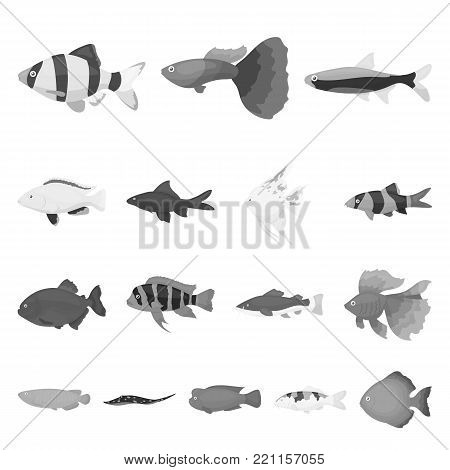 Different types of fish monochrome icons in set collection for design. Marine and aquarium fish vector symbol stock illustration.