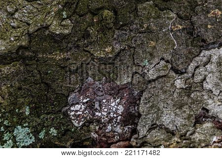 Moss texture can be used for background. Green moss on the wood is a natural background in the forest. Mushroom wood and moss is pattern on decayed.