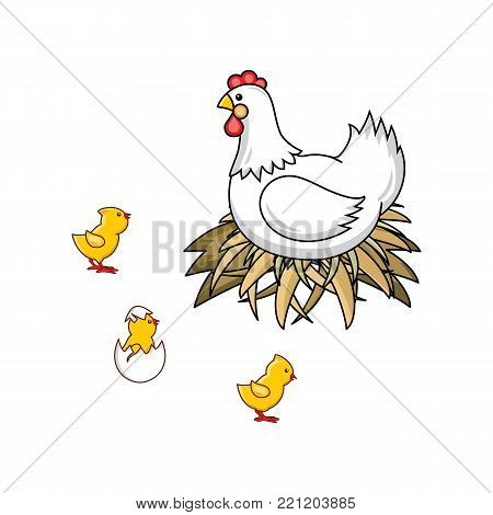 vector flat hand drawn white colored hen chicken, cock sitting in hay nest, yellow chicks, hatching from egg chick icon set. Isolated illustration on a white background. Farm poultry chicken