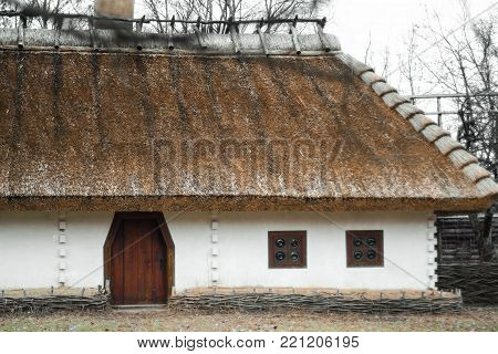 Old traditional Ukrainian house built in wattle and daub technique with thatched roof. Blooming guelder rose arrowwood, viburnum opulus branch in the foreground.