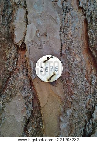 Identification Tag on a Scots Pine Tree