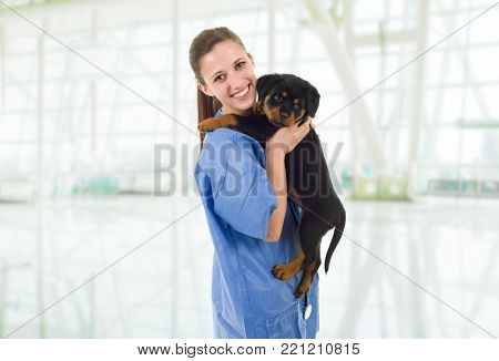 Brunette veterinary with a rottweiler puppy dog