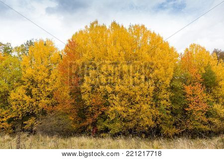 weather, countryside, environment concept. warm autumn day with almost clear blue skies, and not high trees of the grove turned yellow and orange coloures