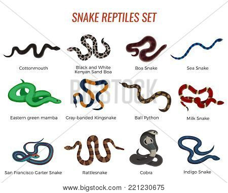 Snakes reptiles set with boa of various types, royal python, cobra, rattlesnake, sea serpent isolated vector illustration