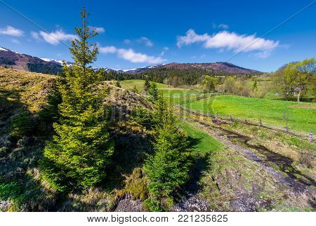 spruce trees near the brook in springtime. lovely countryside scenery in rural area. fresh green grassy fields on hills. deep blue sky with fluffy clouds. mountains with some snow in the distance