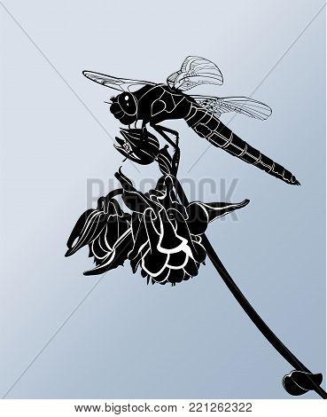 dragonfly. dragonfly on a flower. black dragonfly
