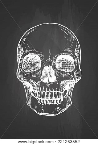 Vector black and white illustration of human skull with a lower jaw in ink hand drawn style on blackboard.