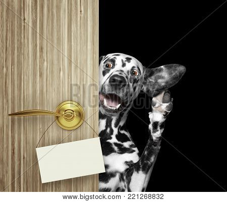 Happy dog peeks out from behind the door. and listnen. Isolated on black background