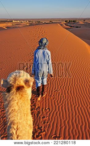 The camel and his master walk through the Sahara in Morocco.