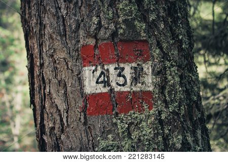 Red And White Trail Marker On A Tree, Reading 437, In Cortina D'ampezzo, Dolomites, Italy