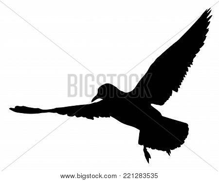 Flying wild common tern - black silhouette - vector