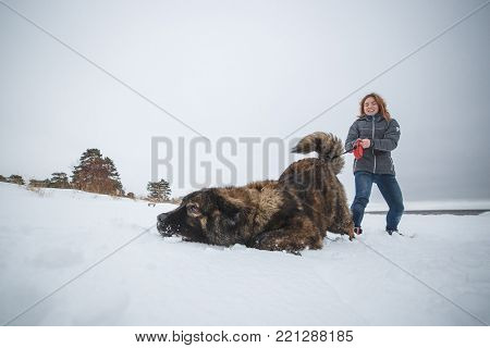 Master and her obedient Caucasian Shepherd dog playing in winter forest.
