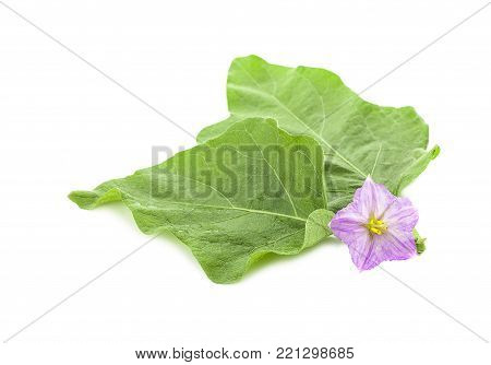 Eggplant flower. / Eggplant green leaf and Purple flowers
