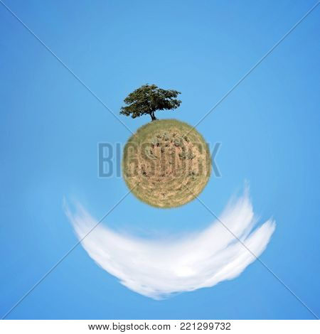 single solitary tree on a hill with blue sky and a white cloud behind on a sunny summer day in a sphere world