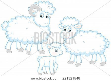 A small white lamb, a sheep and a ram, a vector illustration in funny cartoon style