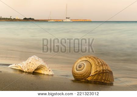 Two seashells against a beautiful background at Paros island in Greece.