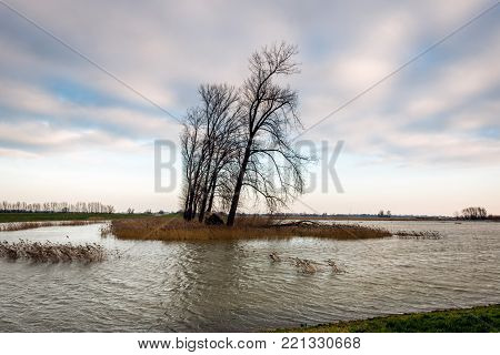Dutch polder flooded by the high water level in the nearby river. It is a cloudy day in the beginning of the winter season.