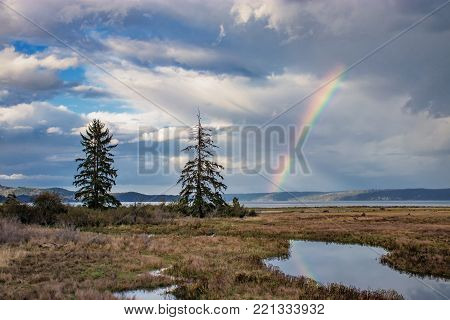 large trees in grassy wetland with clearing storm clouds and a rainbow