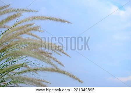 Grass flower blossom in a bed on the roof top of a high building against blue sky white clouds, top view