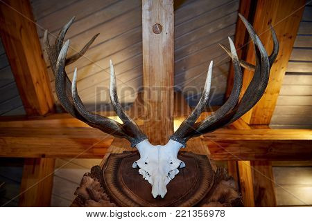 Horns and a deer skull hang under the ceiling of a wooden house