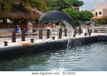 Flying Dolphins - 2