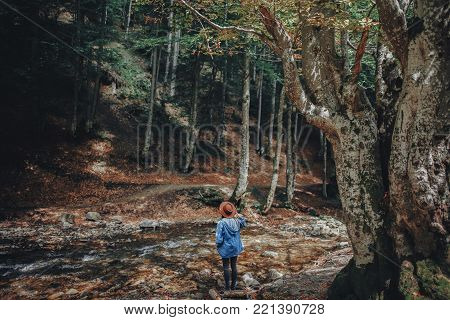 wanderlust and travel concept. stylish traveler girl in hat exploring woods. hipster woman travelling in the forest, walking at river. space for text . vacation