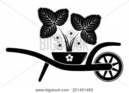 vector wheel barrow and flowering strawberry plant in bowl isolated on white background