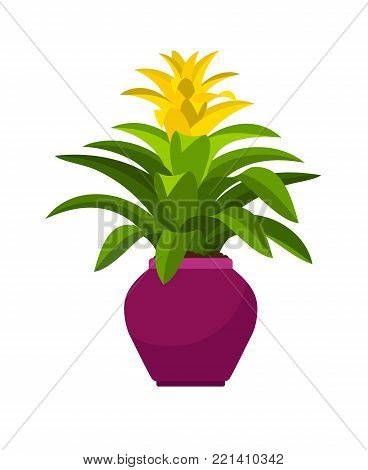 Guzmania house plant in flower pot, vector illustration