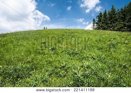 hill covered by mountain meadow with trees and blue sky with cloud - Hnilicka Kycera in Mala Fatra mountains in Slovakia