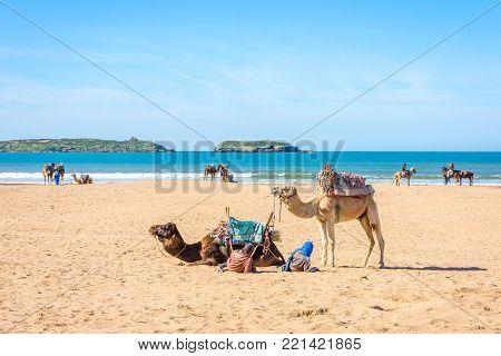 Essaouira Beach With Camels
