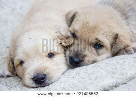 beautiful cute little dogs, small puppies that were still born