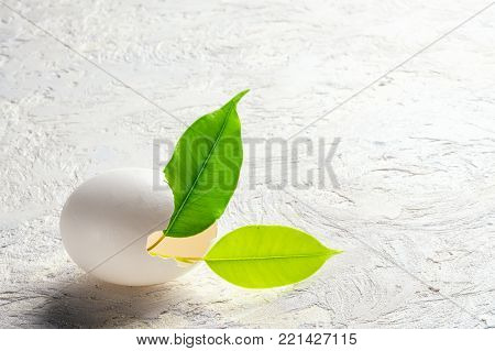 Sprout leaves green plant from eggshell Revival concept of beginning business, start-up, development, new, growth flowering spring new flowering minimal