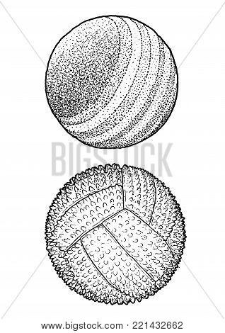 Pet Ball Illustration, Drawing, Engraving, Ink, Line Art