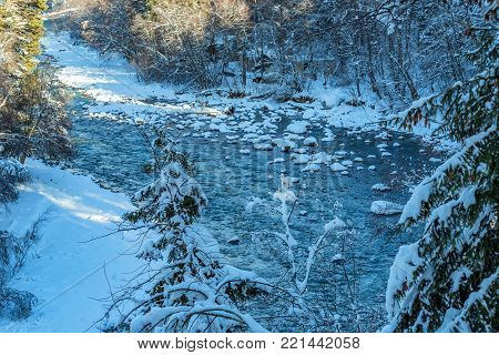 Beautiful winter landscape with turquoise mountain river chained by shores covered with snow and ice. Cold montane stream and snowy softwood forest