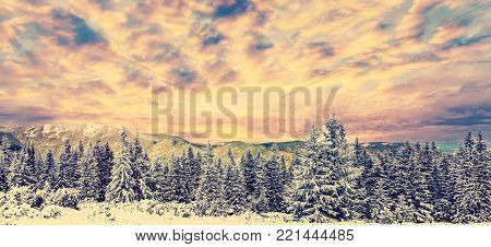 fantastic winter background. picturesque clouds over the snow cowered trees in mountain. gorgeus creative image. retro style. instagram filter.