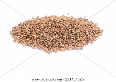 coriander seeds isolated on white background.Close up of spice coriander seed
