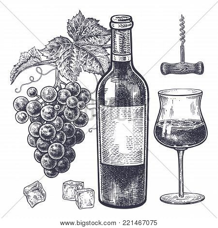 Vintage Hand Drawing On Subject Of Alcohol Bottles With Red Wine Grapes
