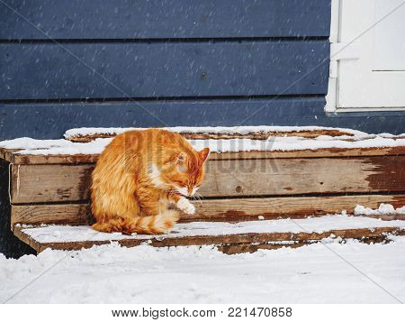 Fluffy ginger cat licking on outdoor wooden porch. Winter background with stray animal on snow.