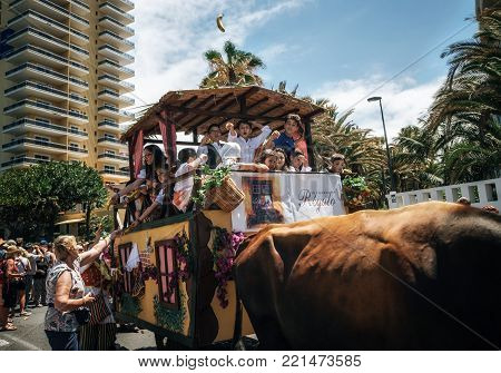Puerto de la Cruz, Tenerife, Canary Islands, Spain - May 30, 2017: Decorated bull drawn wagon and Canarias people in traditional clothes participate in the parade. Tenerife celebrate the Day of the Canary Islands.
