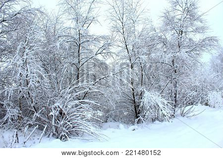 Winter forest. Northern forest. Russian winter. Path in the woods in winter. Trails. The snow drifts. Winter road. Winter forest. Northern nature. Spruce in the snow. Trees in the winter. The snow on the trees. The snow on the branches. Christmas mood
