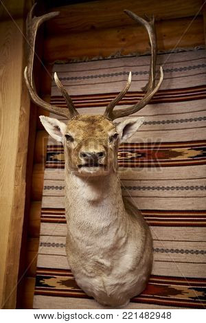 arecrow of a deer hanging on the wall of a wooden house