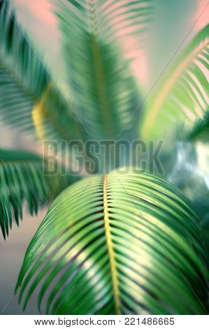 Close up evergreen leaf of a palm tree with a shadow calm green background