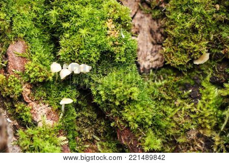 Beautiful moss and lichen covered tree. Bright green moss background. Saturated green abstract pattern. Shallow focus. Filled full frame picture. Moss with autumn wilted brown leaves.