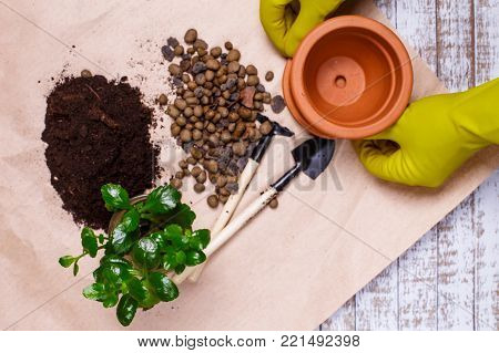 Transplanting houseplants Kalanchoe illustration of procedures and tools for caring for indoor plants.  The gardener prepares a new soil and a flower pot in the home garden.