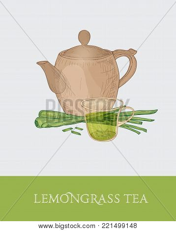 Colorful drawing of teapot, glass cup and fresh cut lemongrass stalks on gray background. Tasty aromatic beverage. Vector illustration hand drawn in elegant vintage style for label, tag, promotion