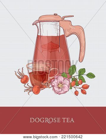 Detailed drawing of glass jug with strainer, cup of tea and dog rose flowers, leaves and red hips or fruits on gray background. Delicious healthy beverage. Colorful hand drawn vector illustration